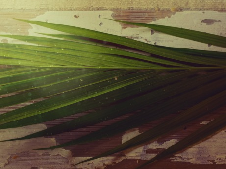 portraits_of_passion_palm_sunday-title-3-still-4x3